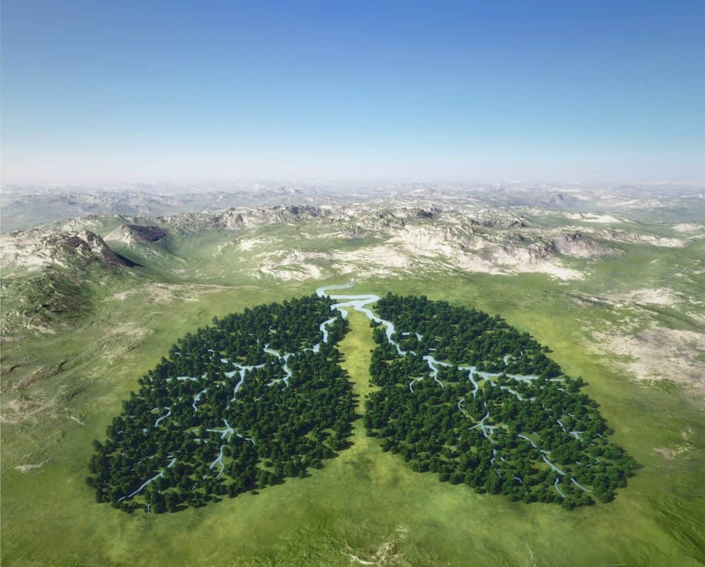 Photo of forest that looks like human lungs to signify the earth recovering from corona virus